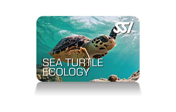 Graziose nell'acqua, le tartarughe marine scivolano nell'oceano con la massima facilità e viaggiano verso spiagge lontane, per garantire la continuazione delle loro specie. Conoscerai la storia di questi rettili marini, sia le minacce naturali che antropogeniche alla loro sopravvivenza, come avviene la riproduzione e come gestiscono le sfide che devono affrontare. Esplorerai tutte e sette le specie viventi di tartarughe marine e sarai in grado di identificarle.